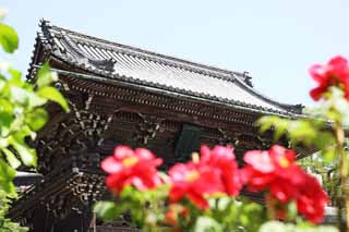 photo,material,free,landscape,picture,stock photo,Creative Commons,The Deva gate of Hase-dera Temple, Mikado, The Kannon, worshiper, Mitera of the flower