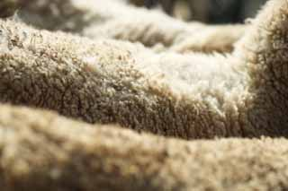 photo,material,free,landscape,picture,stock photo,Creative Commons,Natural wool, sheep, , , Wool