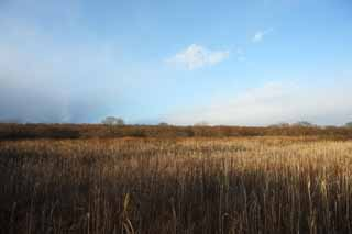 photo,material,free,landscape,picture,stock photo,Creative Commons,The damp plain of the Lake Uto Ney, Damp ground, damp plain, Dry grass, blue sky