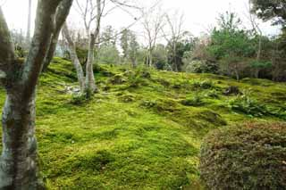 photo,material,free,landscape,picture,stock photo,Creative Commons,A garden of the Tenryu-ji moss, garden, Moss, world heritage, Sagano