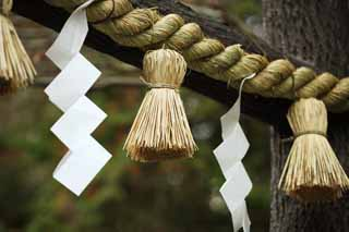 photo,material,free,landscape,picture,stock photo,Creative Commons,Nomiya Shrine decorated sacred straw festoon, Straw, Shinto, decoration, Shinto shrine