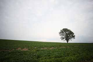 photo,material,free,landscape,picture,stock photo,Creative Commons,A tree of the philosophy, field, tree, The country, rural scenery