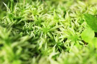 photo,material,free,landscape,picture,stock photo,Creative Commons,Bog moss, Bog moss, , Sphagnum moss,