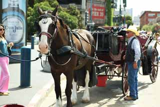 photo,material,free,landscape,picture,stock photo,Creative Commons,A carriage, horse, carriage, I am American, Sightseeing