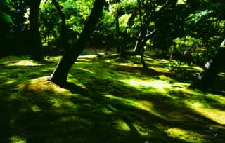 photo,material,free,landscape,picture,stock photo,Creative Commons,Sunlight through tender green 2, Ginkakuji, moss, tree,