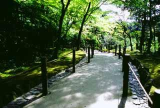 foto,tela,gratis,paisaje,fotografía,idea,Caminito de verde intenso., Ginkakuji, , ,