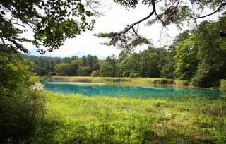photo,material,free,landscape,picture,stock photo,Creative Commons,Aonuma, forest, pond, Azure blue, Mt. Bandai-san