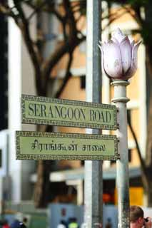 photo,material,free,landscape,picture,stock photo,Creative Commons,A road sign, SERANGOON, flower, street, road