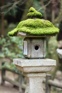 photo,material,free,landscape,picture,stock photo,Creative Commons,Ishigami major shrine stone lantern, I was mossed, Moss, stone lantern, stone garden lantern