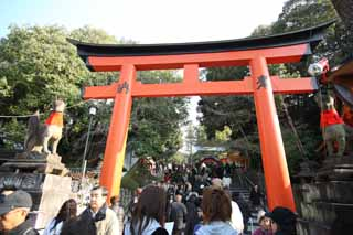 photo,material,free,landscape,picture,stock photo,Creative Commons,Fushimi-Inari Taisha Shrine torii, New Year's visit to a Shinto shrine, torii, Inari, fox