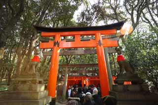 photo,material,free,landscape,picture,stock photo,Creative Commons,1,000 Fushimi-Inari Taisha Shrine toriis, New Year's visit to a Shinto shrine, torii, Inari, fox