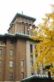 photo,material,free,landscape,picture,stock photo,Creative Commons,The Kanagawa prefectural office, ginkgo, Colored leaves, national flag, brick
