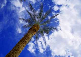 photo,material,free,landscape,picture,stock photo,Creative Commons,Blue in Las Vegas, blue sky, palm, ,