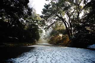 photo,material,free,landscape,picture,stock photo,Creative Commons,Meiji Shrine approach to a shrine, The Emperor, Shinto shrine, Snow, An approach to a shrine