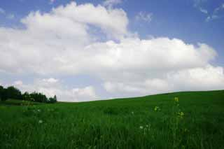 photo,material,free,landscape,picture,stock photo,Creative Commons,Hill of pasture, pasture, cloud, blue sky,