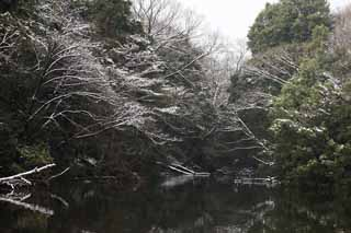 photo,material,free,landscape,picture,stock photo,Creative Commons,Meiji Shrine Imperial garden, Shinto shrine, pond, The Emperor, Nature