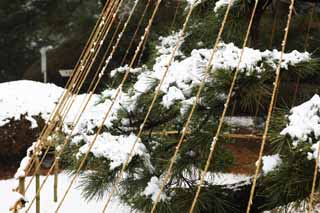 photo,material,free,landscape,picture,stock photo,Creative Commons,Meiji Shrine Imperial garden, Shinto shrine, The branch-supporting snow-ropes of the pine, The Emperor, Snow fishing