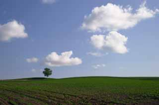 photo,material,free,landscape,picture,stock photo,Creative Commons,Watching the farmland, tree, cloud, blue sky, field