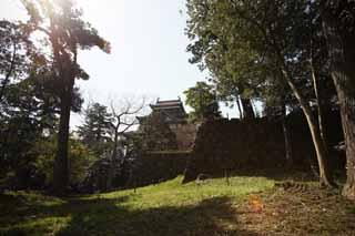 photo,material,free,landscape,picture,stock photo,Creative Commons,The Matsue-jo Castle castle tower, pine, Piling-stones, castle, Ishigaki