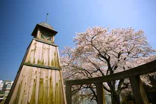 photo,material,free,landscape,picture,stock photo,Creative Commons,Gensuke cherry tree, cherry tree, , , garden lantern