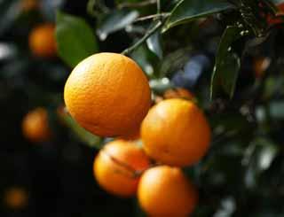 2012لآنـاقة الصيفية ببيتك أحلى شورتاتوصفات قشور البرتقال لإزالة مكياج العينمنطـــــــتاد\